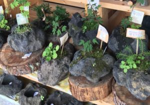 発地市庭の苔石